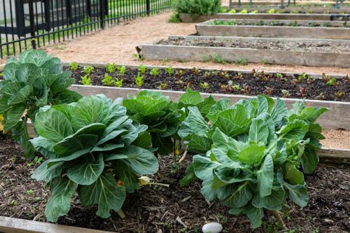 Wesley Food Garden
